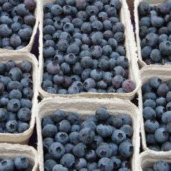 blueberry-61510_640