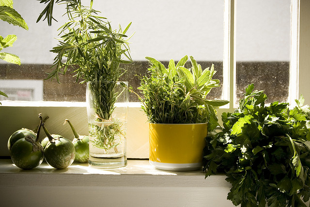 How to grow an indoor organic apothecary herb garden with for Eco indoor garden house