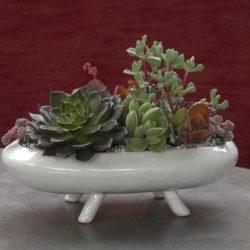 Flora-Grubb-Succulents-1