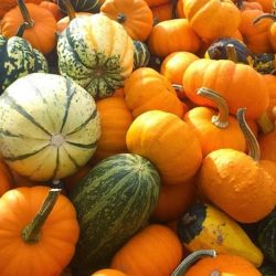 pumpkin-179527_640