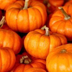 pumpkin-220122_640