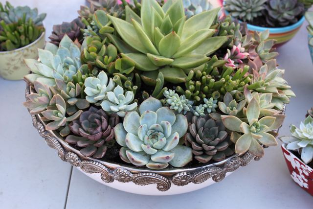 Last Minute Holiday Gift Idea: Succulent Gardens | Sweet Greens