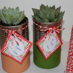 succulents-10