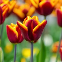 flowers-164453_640