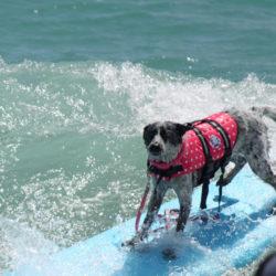 dog-4-copyright-Jennie-Lyon