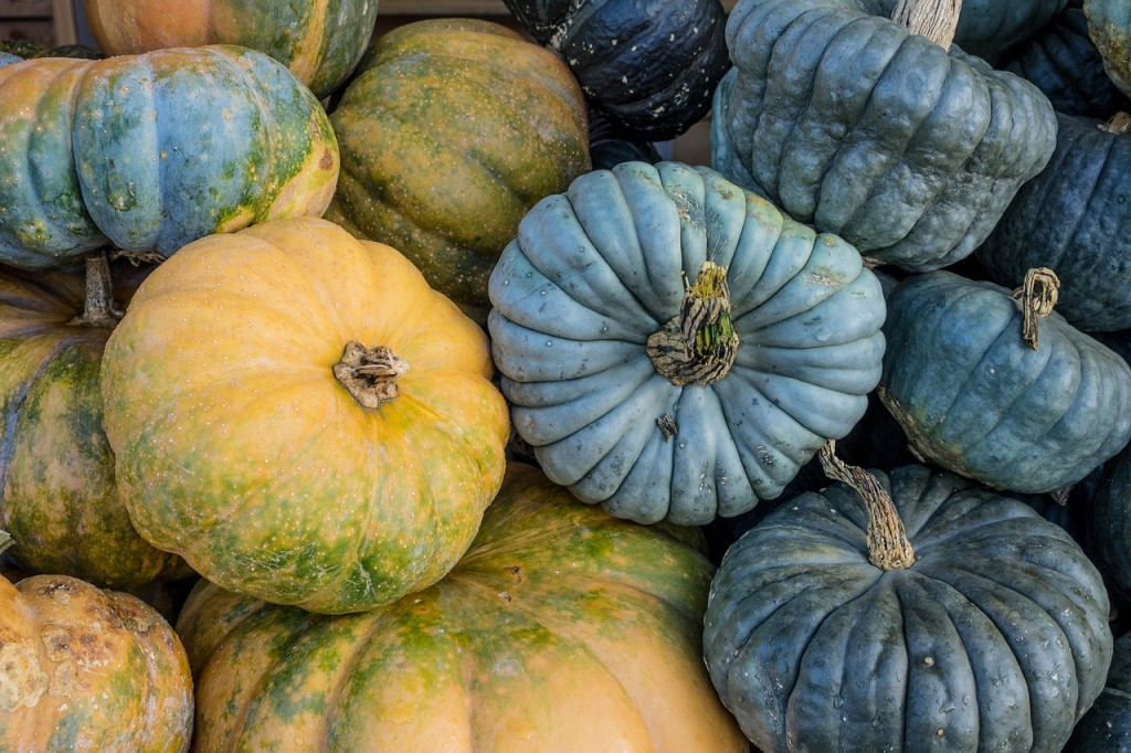 31 Simple Eco-Friendly Ways to Celebrate October