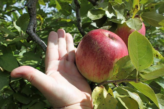 orchard-5