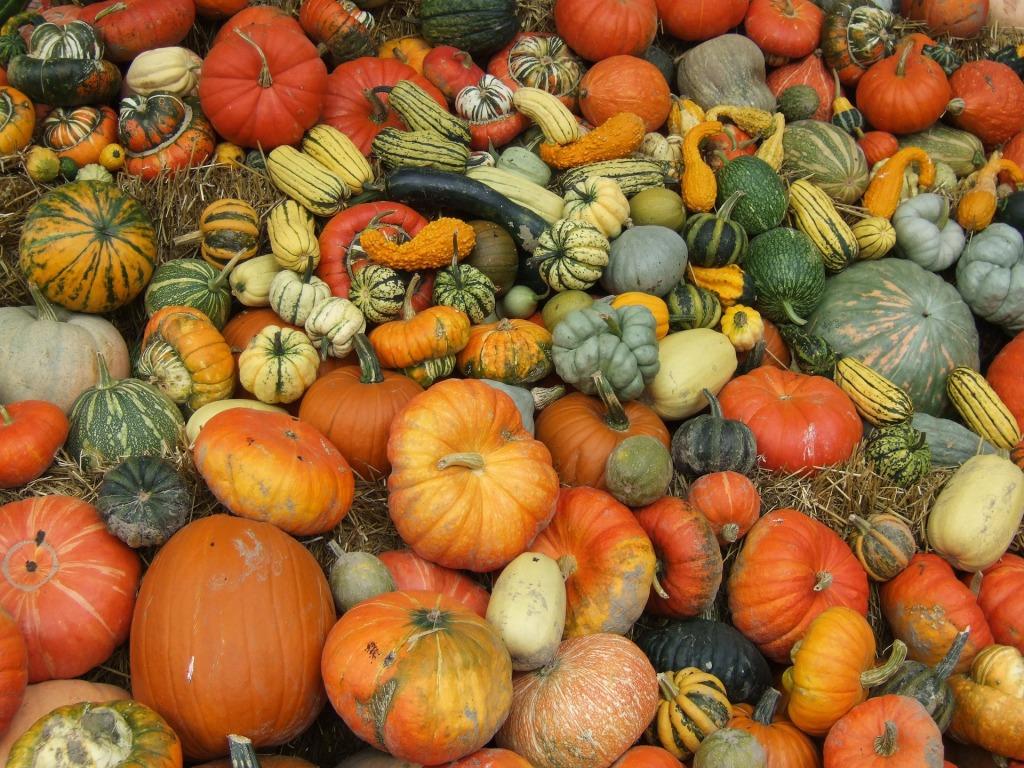 pumpkin-8544_1920