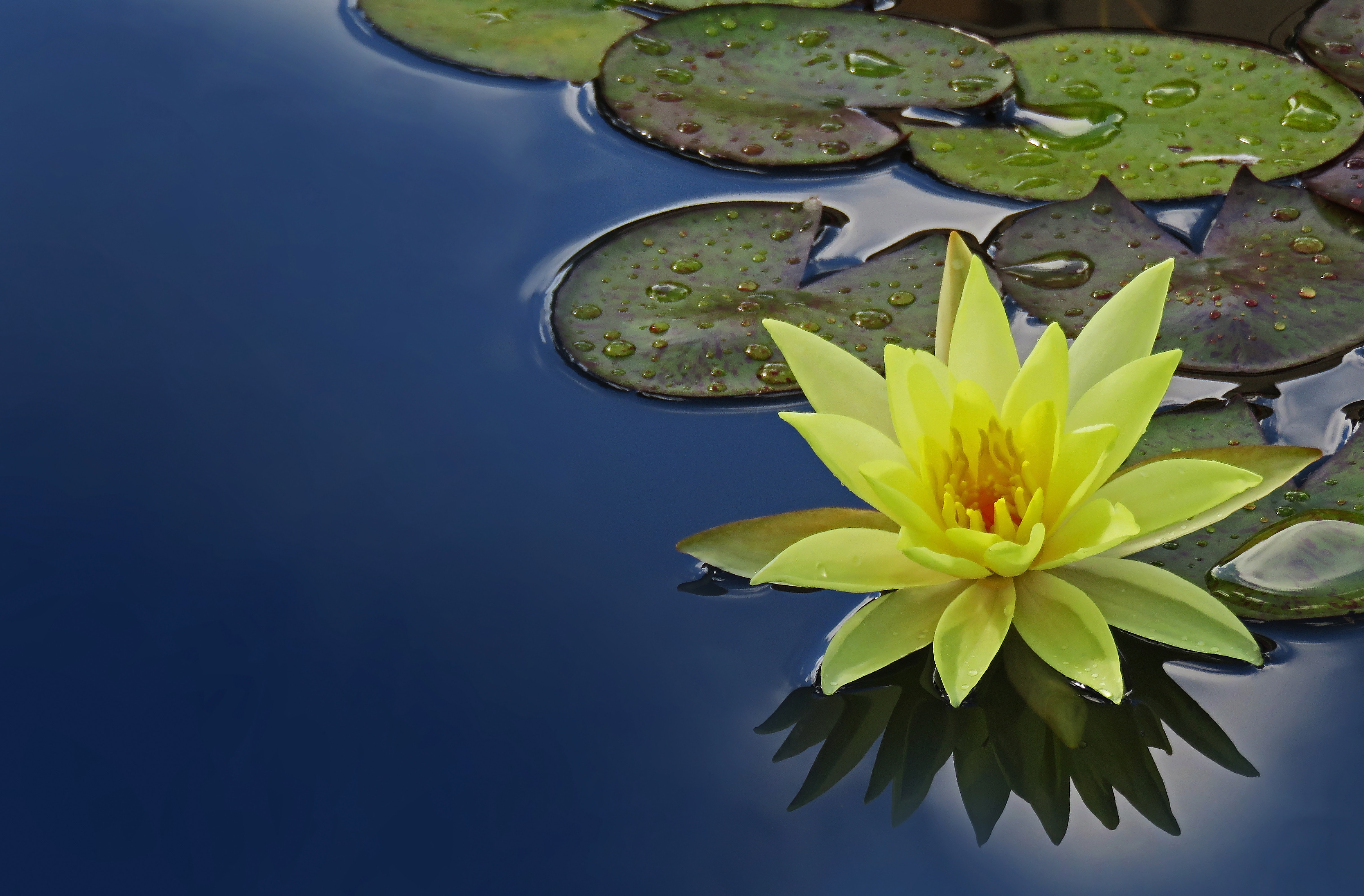 The worlds first flower most likely looked like todays water lily how would you feel if someone told you that all of the flowers in the world come from one ancestor while it may seem dramatic its true according to a izmirmasajfo